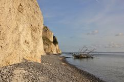 Moens Klint and death tree fallen of the cliff into the sea. Royalty Free Stock Photography