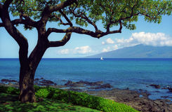 Unique Maui tree. This unique tropical tree frames the view of Molokai Island. Photographed from the shoreline of Maui, Hawaii Royalty Free Stock Photos