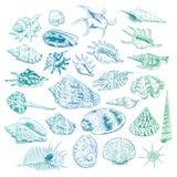 Unique museum collection of sea shells rare endangered species, molluscs Bivalvia Venus comb murex Corculum cardissa Tridacna squa. Mosa Muricidae blue green Royalty Free Stock Photos