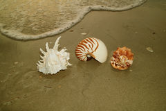 Unique Natural Seashells on the Sea Shore with the swash Royalty Free Stock Images
