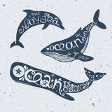 Unique nautical lettering with whales and dolphin. Set of marine animals with lettering dolphin, cachalot and orca with hand drawn lettering, vector nautical Royalty Free Stock Photography
