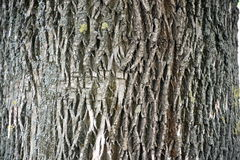 Unique old wooden bark texture - background Royalty Free Stock Images