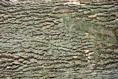 Unique old wooden bark texture - background Stock Images