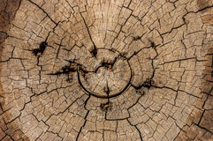A unique old, worn, weathered section of wood with cracked rings and amazing detailed texture great for backgrounds. stock photo