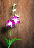 Unique orchid on teak Royalty Free Stock Image