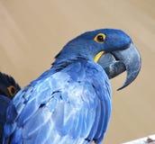 Unique parrot Stock Photos