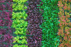 Unique pattern of colorful plant Royalty Free Stock Photos