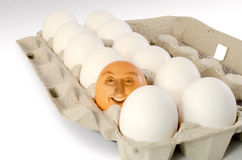 Unique person target market concept. Brown egg amongst all the regular white eggs depicting Unique Individual and Leader concept Stock Photography