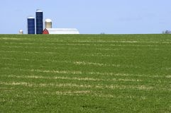 Unique Perspective of Dairy Farm and Hay Field. Barn and silos from a dairy farm rise from behind a low ridge. In the foreground is a green hay field stock photography