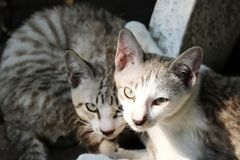A street cat couple in Bangkok. This unique picture shows a cat couple living on the street in Bangkok. These two cats are best friends and are very nice stock images