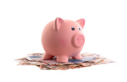 Unique pink ceramic piggy bank Stock Photography