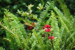Exotic red flower with lush green leaves stock photos