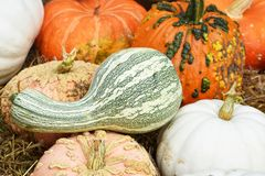 Unique Pumpkins and Gourds Stock Photography
