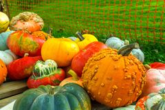 Unique Pumpkins For Sale at Market. Variety of pumpkins for sale during fall 2016 at famers market Royalty Free Stock Images