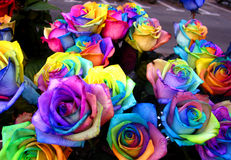 Unique rainbow roses Royalty Free Stock Images