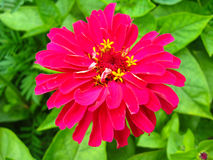 Unique red flower Royalty Free Stock Photo