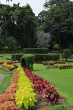 Unique Royal Botanical gardens in Peradeniya is considered as one of the best in Asia, as it contains a collection of 4000 species Stock Image