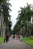 Unique Royal Botanical gardens in Peradeniya is considered as one of the best in Asia, as it contains a collection of 4000 species Stock Photo