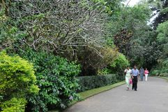 Unique Royal Botanical gardens in Peradeniya is considered as one of the best in Asia Stock Image
