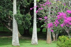 Unique Royal Botanical gardens in Peradeniya is considered as one of the best in Asia Royalty Free Stock Images
