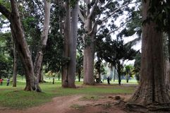 Unique Royal Botanical gardens in Peradeniya is considered as one of the best in Asia Stock Photo