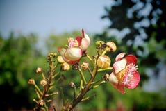Unique Shape Pink Flower. Close-up Unique Shape Pink Flower on the Tree Stock Image