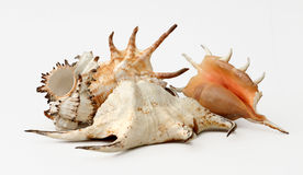 Unique shells Stock Photo