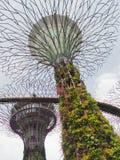Unique supertrees in Singapore, unusual architecture Stock Photography