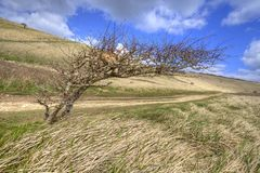Unique tree Stock Photo