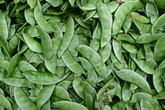 Unique type of Snow pea with velvety and furry hairy texture Royalty Free Stock Image