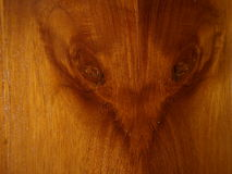 Unique varnished wood - rat face on wood Stock Photos