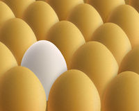 Unique white egg. Between golden eggs Royalty Free Stock Images