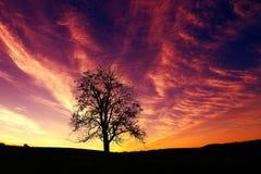 Unique wooden silhouette of a beautiful sunrise stock photo