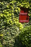 Uniqueness. Country house's red window with vines Royalty Free Stock Images