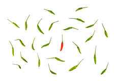 Uniqueness, differen, special, concept, against concept. Using fresh red and green chili on white background Stock Image