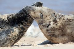 unité Amitié, amour et émotion animaux Salutation sauvage affectueuse de joints photos libres de droits