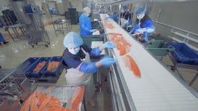 Unité d'usine de traitement du poisson avec le personnel assortissant et traitant des saumons banque de vidéos