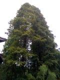 Unité de forêt Photos stock