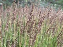 Unité harmonieuse avec la nature parmi de hautes herbes fleurissantes image libre de droits