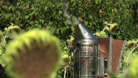 Unit to smoke out hives. Smoke comes from dry grass and wood stock footage