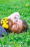 Unite with nature concept. Bearded man with dandelion flowers lay on meadow, grass background. Man with beard on smiling. Face enjoy nature. Hipster with royalty free stock images
