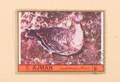 A stamp printed in the United Arab Emirates shows a bird, circa 1972. UNITED ARAB EMIRATES - CIRCA 1972: A stamp printed in the United Arab Emirates shows a bird stock photography