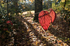 United colors of Autumn in a forrest. United colors of Autumn time Royalty Free Stock Images
