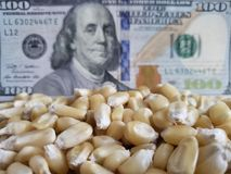 United States of America, maize producing country, dry corn grains and american banknote of 100 dollars. Yellow edible seed, agriculture and harvest, world stock image