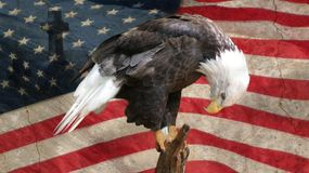 United States of America prayer. Bald eagle bowing down in sorrow in front of the United States of America flag of the killings Royalty Free Stock Image