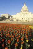 United States Capitol Building at Sunset, Washington, D.C. Stock Images