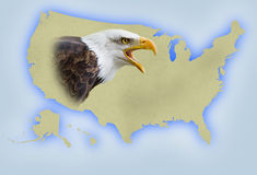 United States map. With a bald eagle Stock Photo