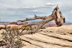 United States nature. In Utah. Needles district of Canyonlands National Park Stock Photography