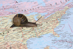 United States Travel. A snail travelling throughout the United States on a map Stock Photography