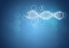 Unites all human gene DNA. Background with hexagon. And information board. Blue background Stock Image